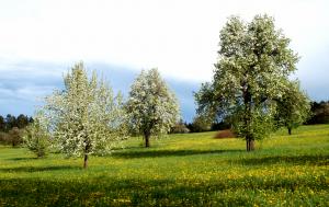Streuobstwiese am Warenberg, Villingen